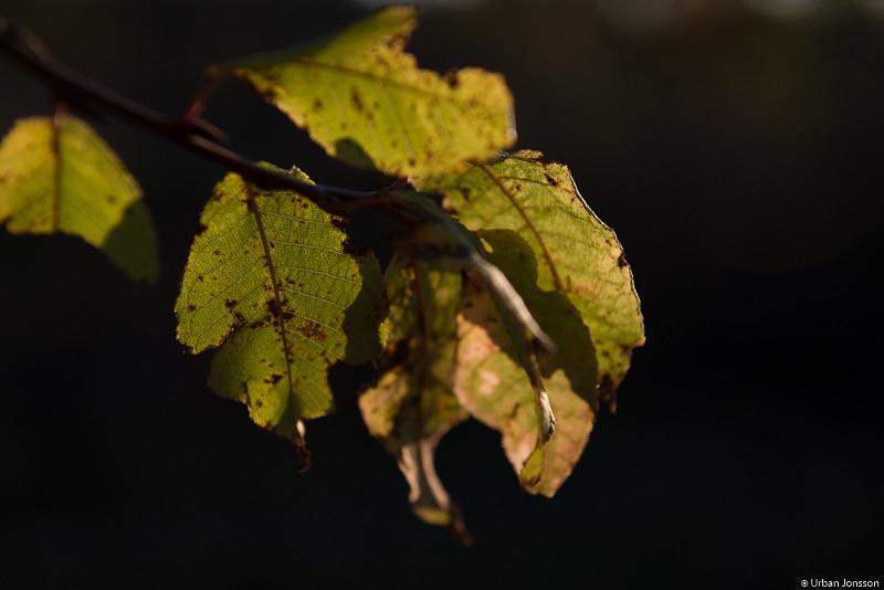 Rävsten bjöd på en vacker höstskrud med massor av svamp i skogen.