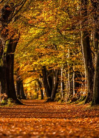 Lady Mary Walk, Autumn 2014