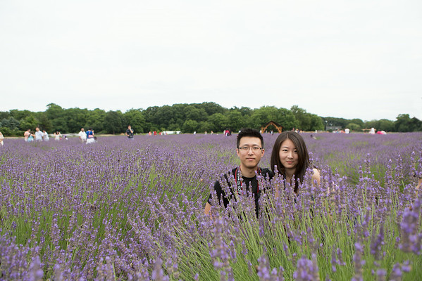 Lavender By The Bay 07/19/2014