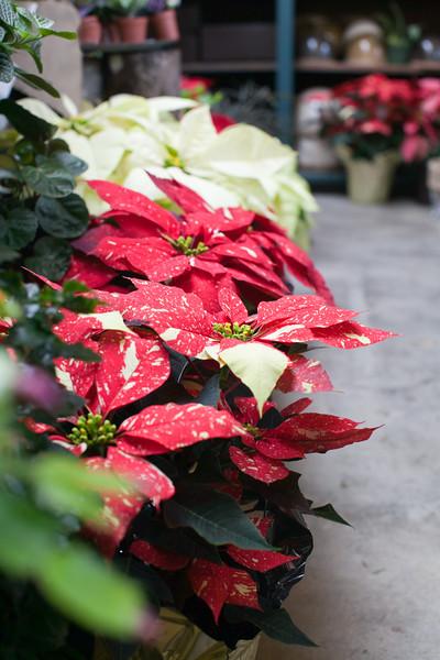 Flowerland-Dec2014-9-4009