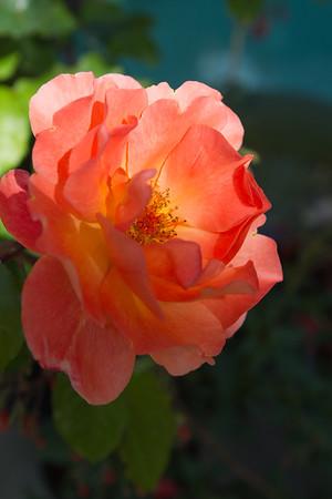 Flowerland-May2014-7867