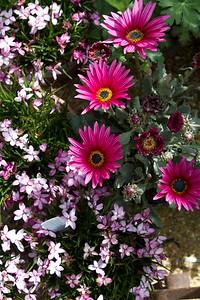Flowerland-May2014-7894