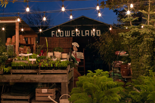 Flowerland-Nov2014-3-3403