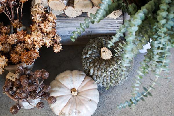 Flowerland-Nov2014-10-3457