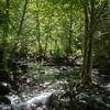 Dead end of Rattlesnake Ridge trail