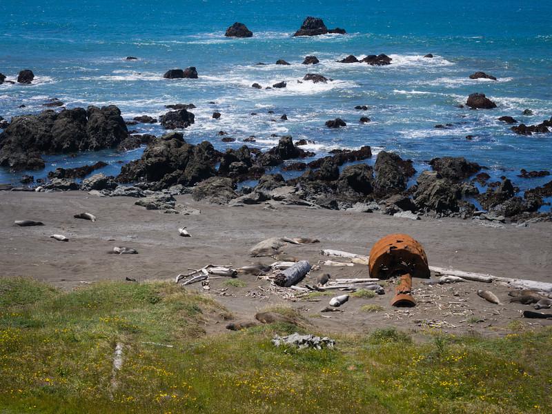 Seals and rocks