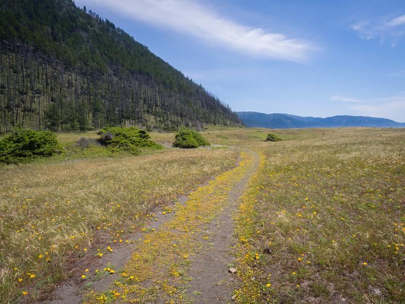 Path of goldfields