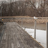 140326 3A Ent JOED VIERA/STAFF PHOTOGRAPHER-Lockport, NY- Gees and Seagulls wade in the water on the Canal on Mar.26, 2014.