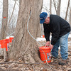 140319 Maple JOED VIERA/STAFF PHOTOGRAPHER-Cambria, NY- Rich Goodman checks a bucket filled with maple tree sap on Wednesday, Mar. 19th, 2014.