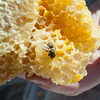 140404 Slideshow JOED VIERA/STAFF PHOTOGRAPHER Lockport, NY-Geri Hens shows a deseased bee colony April 2, 2014.
