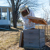 140404 Slideshow JOED VIERA/STAFF PHOTOGRAPHER Lockport, NY-Geri Hens tends to a honey bee colony April 2, 2014.