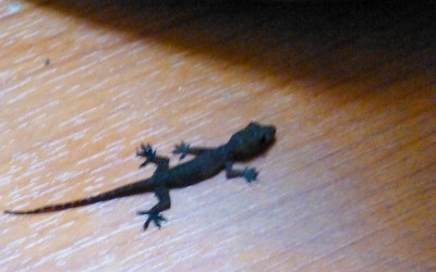 Salamander came in from our balcony. Lois worried about what he needed to eat.