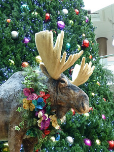 Christmas decorations in the El Tesoro Mall included a moose keeping watch over the roller skaters on the rink.