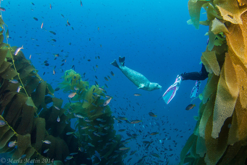 Little Tubby checking out Gayle's fins