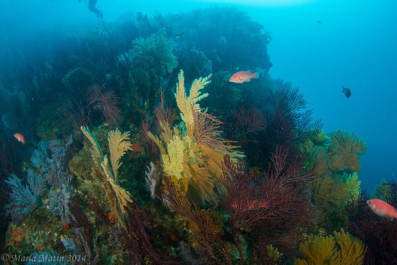The new Sea Fan Grotto - Pedestal Rock