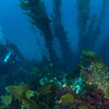 Janet 20 feet below, on the edge of the kelp forest, and the sand another 30 feet below her