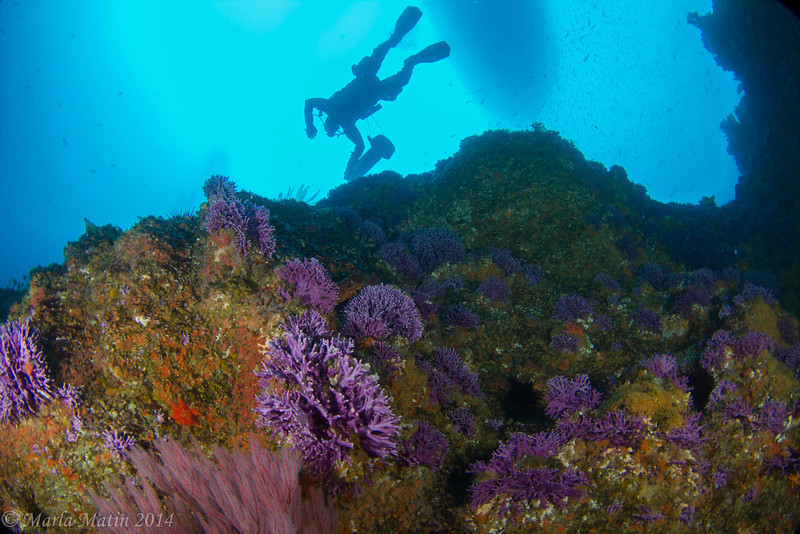 Purple hydrocoral, Bill, and the good ship Horizon