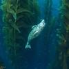 Harbor seal pup hamming it up