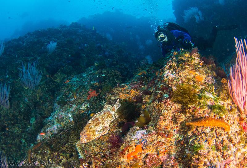 Janet watches a California scorpionfish
