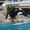 We also visited Sea World. He loved the Orka show and Dolphin show. His favorite was the sea lion show.