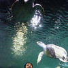 with the turtles in sea world
