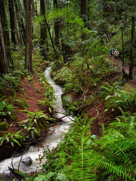 Webb Creek