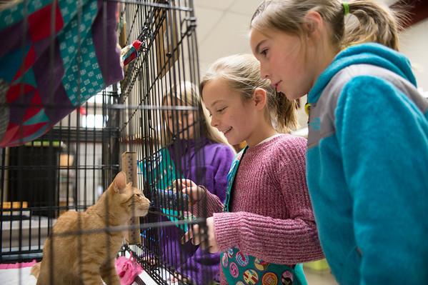 JOED VIERA/STAFF PHOTOGRAPHER-Pendleton, NY-Rachel Dickey, Emma browka and Jillian O'Connell play with a cat at the Pets Alive Adoption Center Tuesday, November, 18 2014.