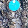 MET112114 EAB tag
