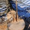MET112114 EAB stump
