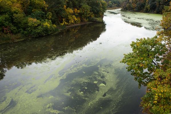 JOED VIERA/STAFF PHOTOGRAPHER-Olcott, NY-Algae blooms on Eighteen Mile Creek. Wednesday, October, 15 2014.
