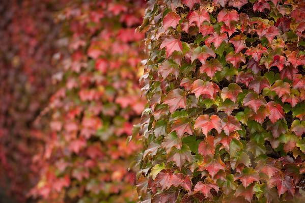 JOED VIERA/STAFF PHOTOGRAPHER-Olcott, NY-Fall foliage warms up the Olcott Beach landscape. Wednesday, October, 15 2014.