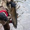 JOED VIERA/STAFF PHOTOGRAPHER-Burt, NY-Ron Bryan from West Virginia picks up his salmon at Fisherman's Park. Wednesday, October, 8, 2014.