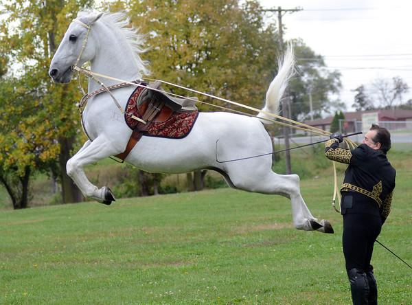 MET1015 horses capriole