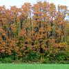 MET101414 autumn
