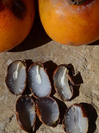 MET100814 persimmon