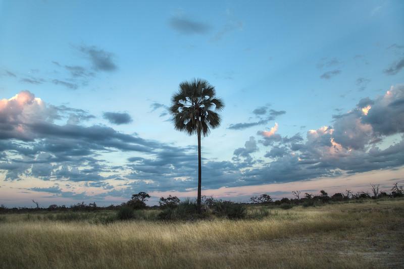 Palm at Sunrise - Xigera