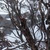 Dead snow gum branch.