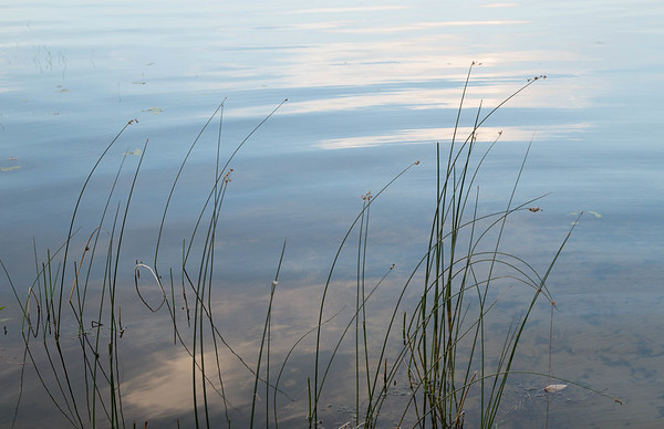 Reeds at Pine Lake