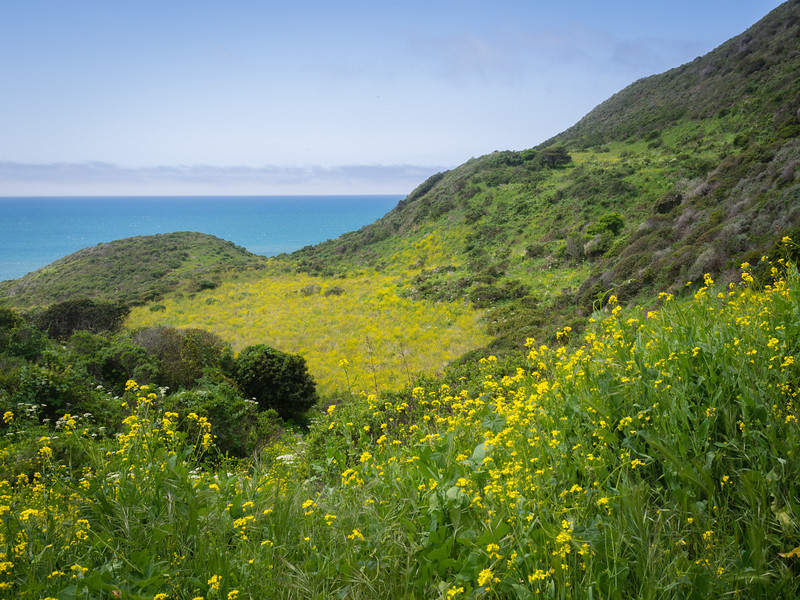 Mixed vegetation