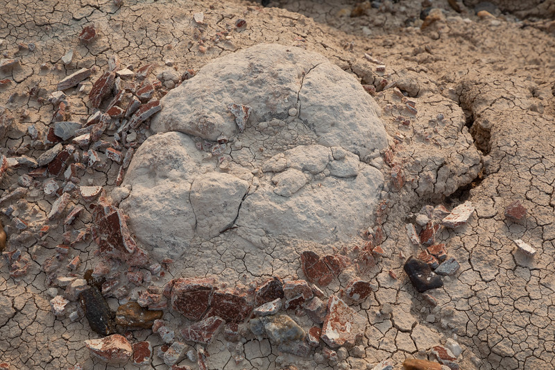 Remains of Fossilized Turtle Shell