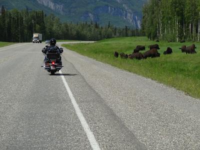 Ride to Arctic Circle