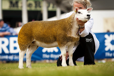 The Kermode family's first prize ewe lamb
