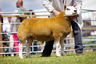First prize tup lamb from the Campbell family