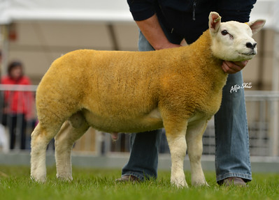 James Wilson's first prize ram lamb WWB1400592