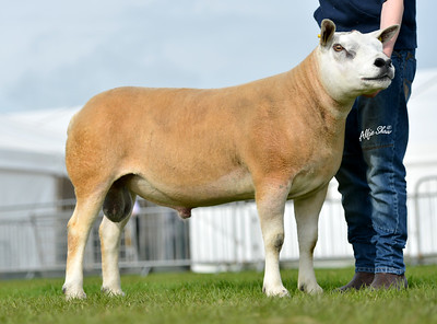 Royal Ulster Agricultural Show