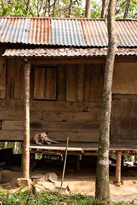 Next we hit Bukit Lawang for a jungle trek to experience semi-wild orangutans.