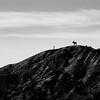 Hilltop Moose