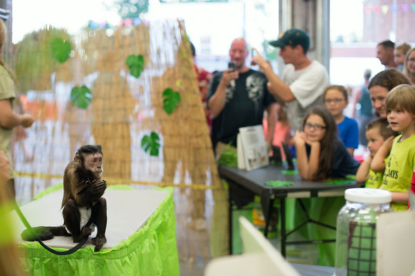 JOED VIERA/STAFF PHOTOGRAPHER-Wilson, NY-Fair patrons watch Emily a 16 year old capuchin monkey from the primate sanctuary eat cheerios on Thursday, August, 21st.
