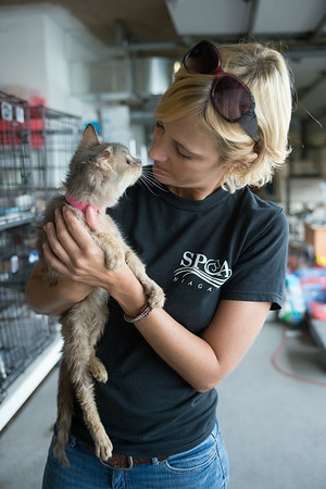JOED VIERA/STAFF PHOTOGRAPHER-Niagara Falls, NY-SPCA Director Amy Lewis comforts a cat rescued from a Newfane residence on Wednesday, August, 27th. The cat lost it's eyes and an ear to infections.