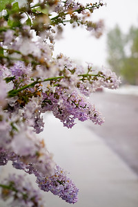 LIlac and the road